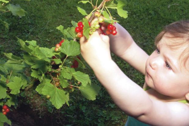 enfant qui cueille un fruit