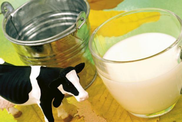 verre de lait avec petite vache en plastique