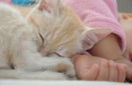 un bébé dort avec un petit chat