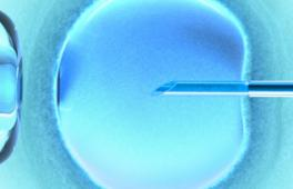 La FIV consiste à inoculer des spermatozoïdes au sein de l'ovocyte
